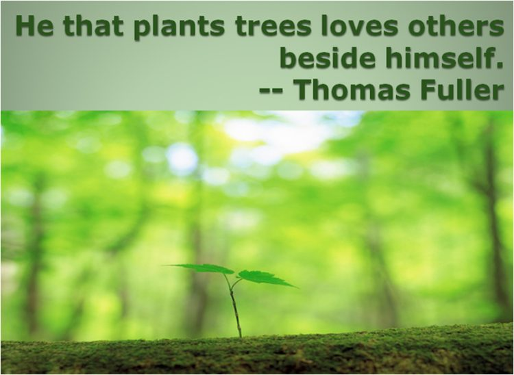 best quotes about tree