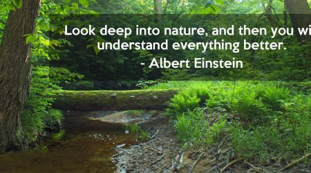 top environment sayings and quotes