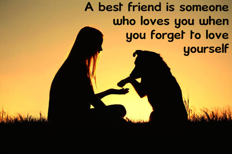 Funny Lost Dog Best Friend Song