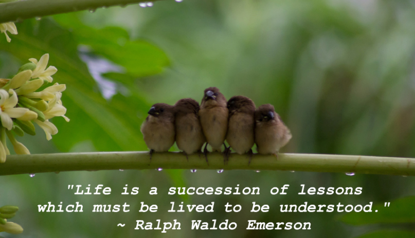 Famous Quotes about Life (10)