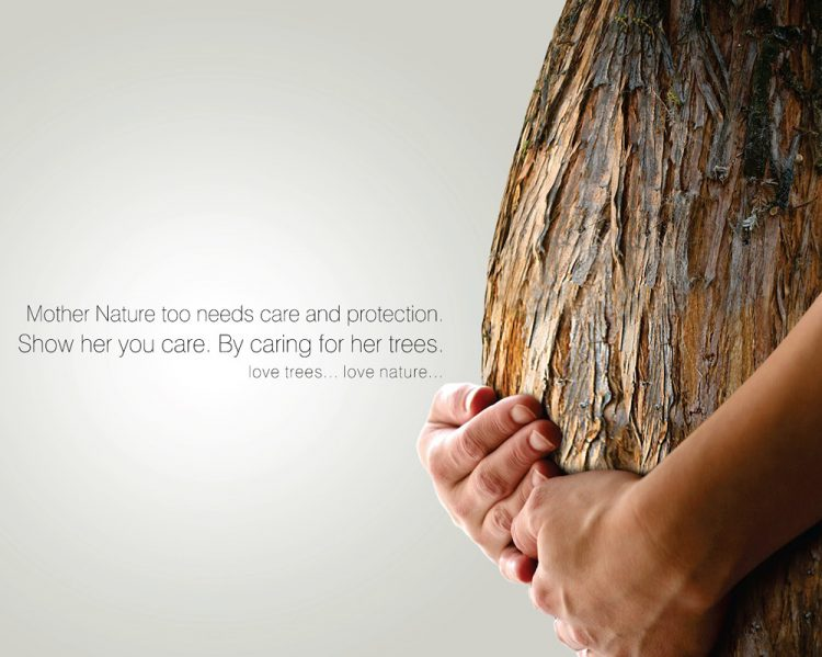awesome tree quotes