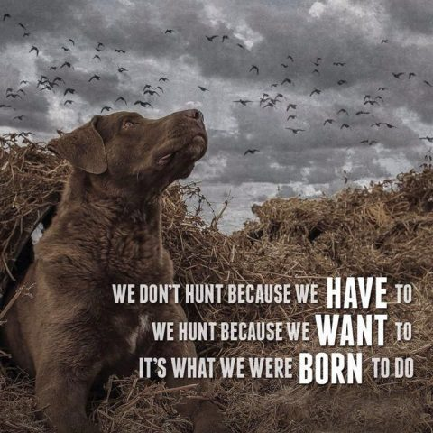 most popular hunting quotes and sayings