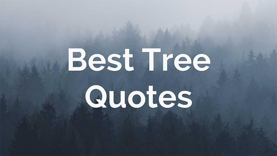best-tree-quotes