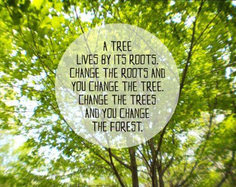 sayings on tree
