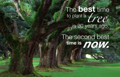 popular Chinese proverb on tree