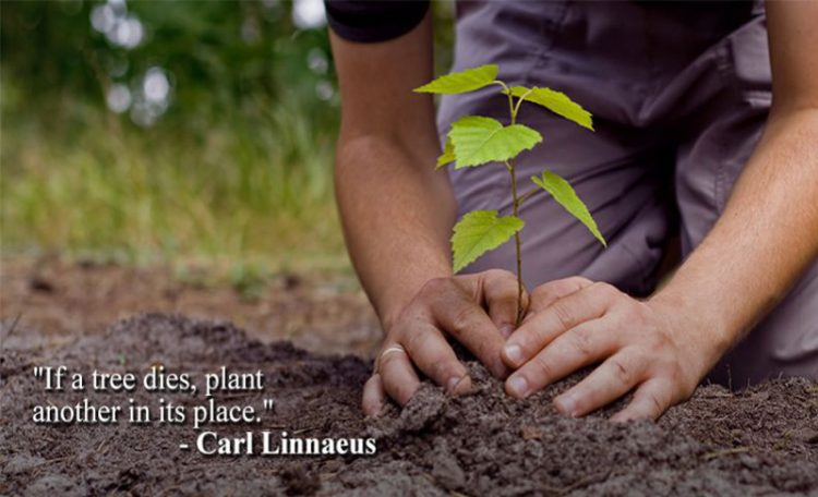 great quotes on tree plantation