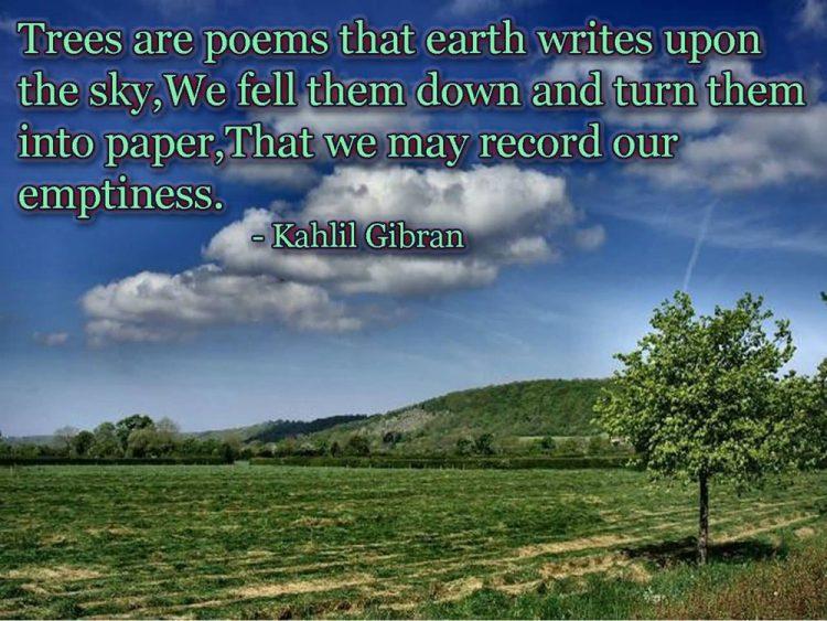 best tree quotes