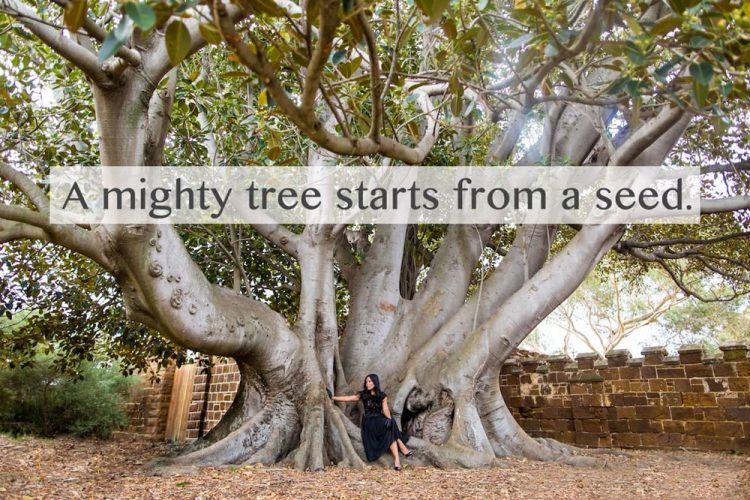 top tree quotes image